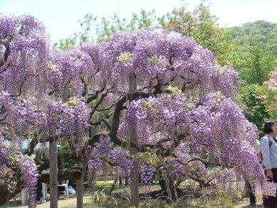 flower park 015