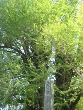 flower park 069