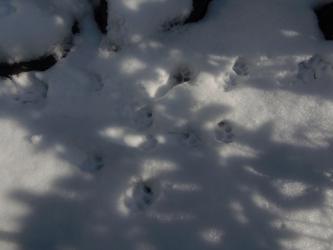 大晦日の猫たち1