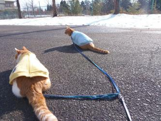 大晦日の猫たち2