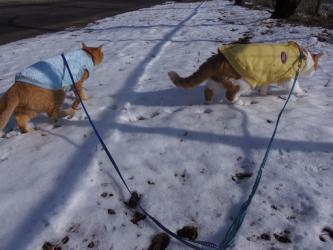 大晦日の猫たち3
