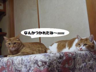 大晦日の猫たち5