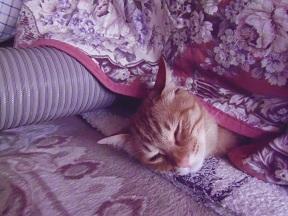 大晦日の猫たち6