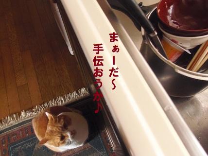 2ストーカー猫