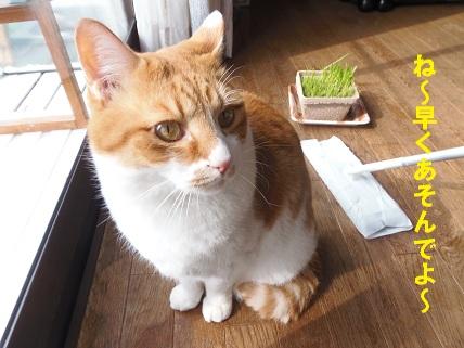 ストーカー猫1