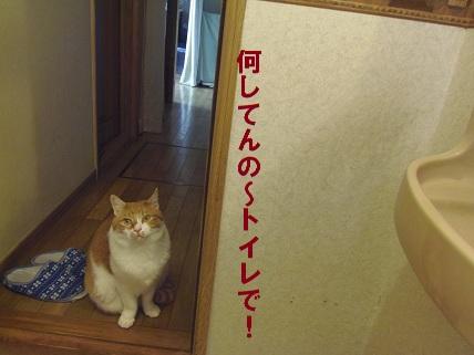 ストーカー猫4