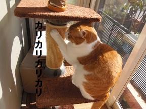 ストーカー猫5