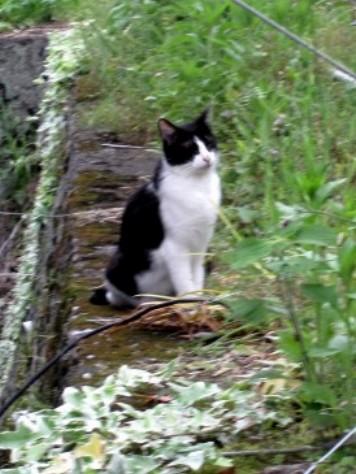 猫 004