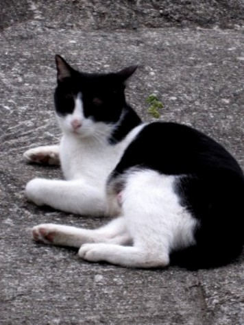 猫 015