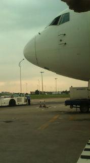 フレンチブルドッグ 飛行機のあたまだよ