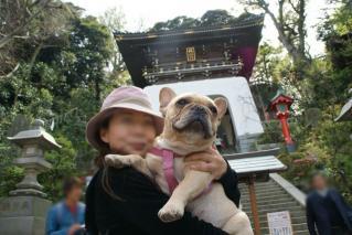 フレンチブルドッグ ママと神社に来たよ