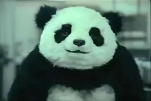 funny-panda-cheese-tv-cm.jpg
