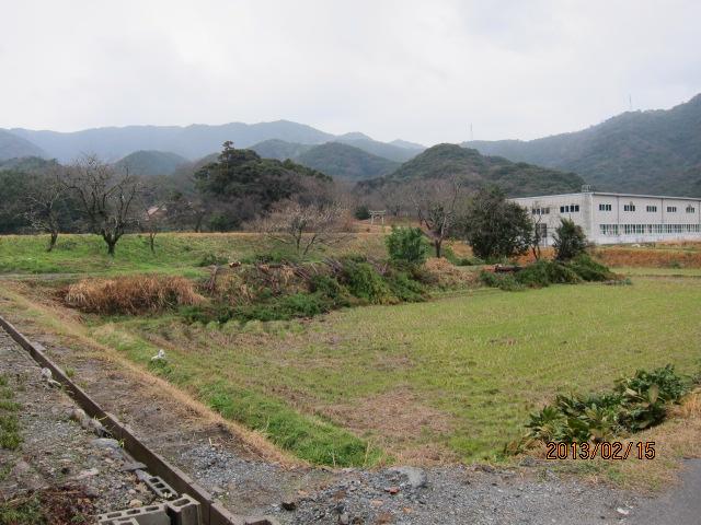 伐採した後の背戸山