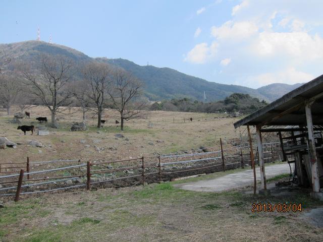 放牧場、乳牛