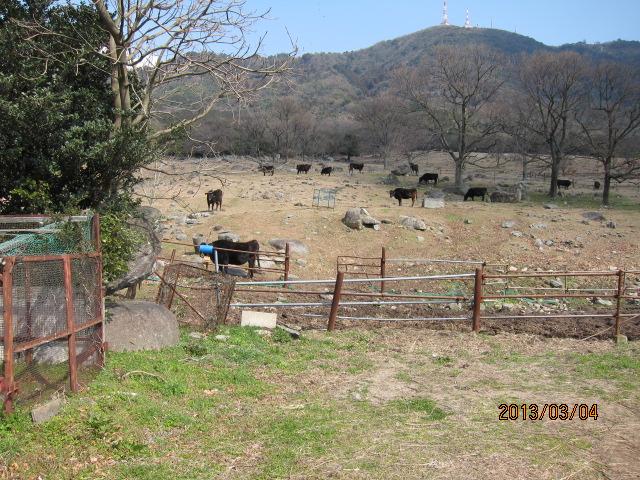 放牧場、肉牛