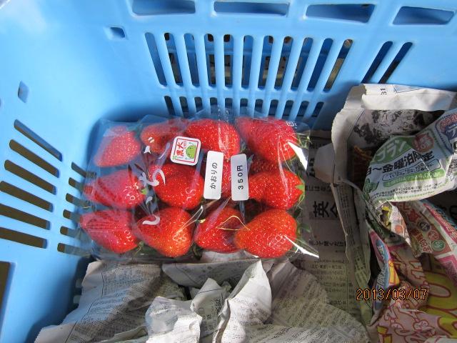 出荷前のイチゴ