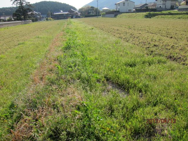 草を刈る前の大貫