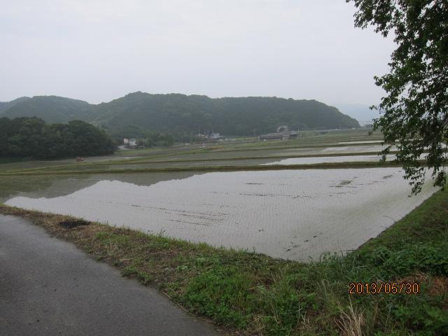 西村のコシヒカリ