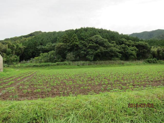 フクユタカの畑と里山