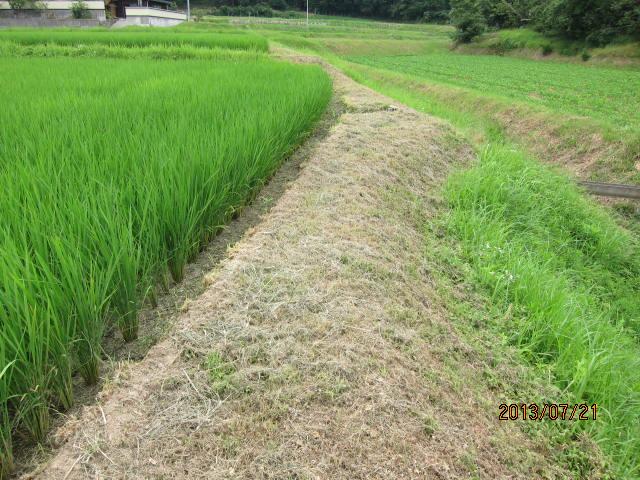 草を刈った畦その2