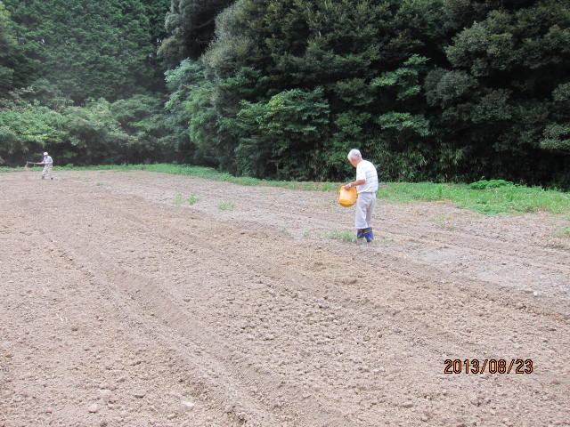 蕎麦の種まき