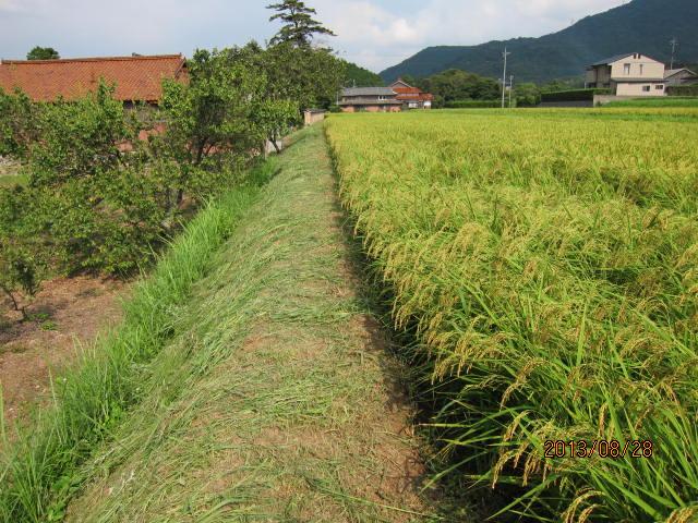 8月28日草刈りを始めたところ