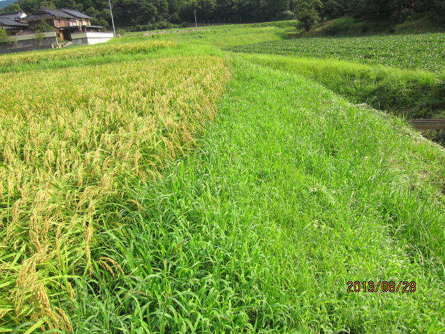 8月28日これから草刈りをするところ