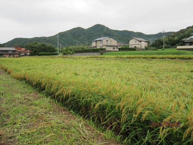 9月3日雨が続き草が再度伸びてきた