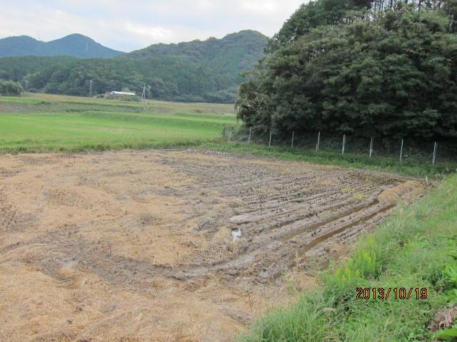 小堤の泥田