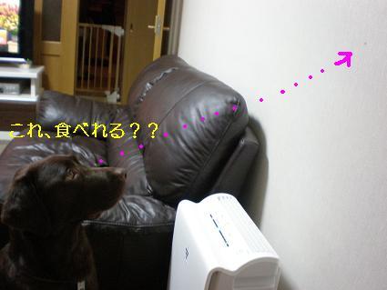 P7160095-2.jpg
