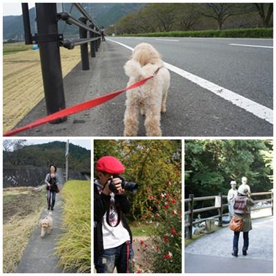 cats_20101020215104.jpg