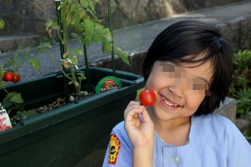 13.07.11トマト収穫