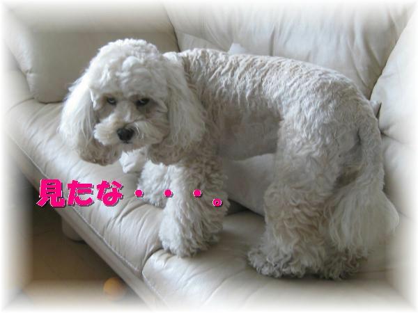 001_convert_20111020203845.jpg