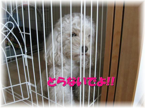 006_convert_20120125191953.jpg
