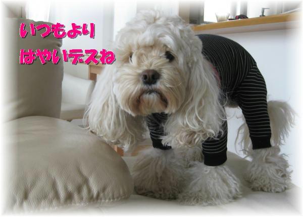 020_convert_20120307164146.jpg