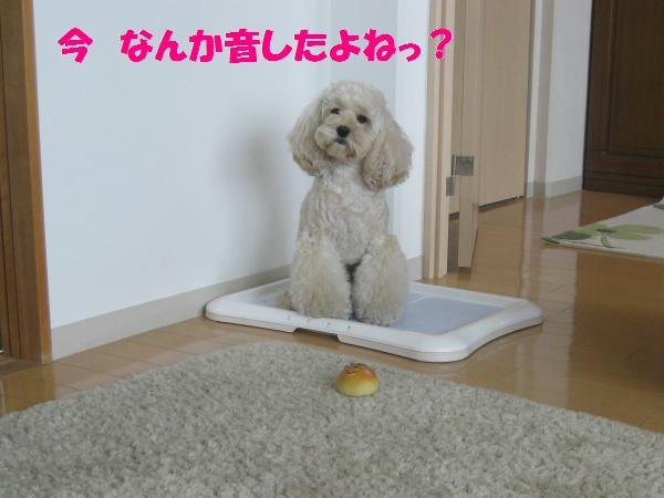023_convert_20110911134421.jpg