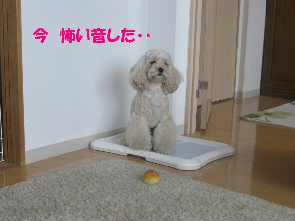 026_convert_20110911140023.jpg