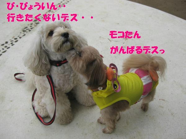 026_convert_20110912142239.jpg