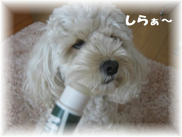 029_convert_20111006165733.jpg
