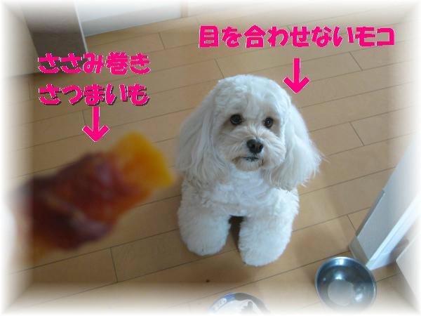 030_convert_20111125134403.jpg