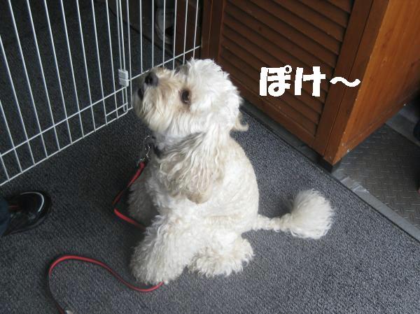 034_convert_20111003151144.jpg