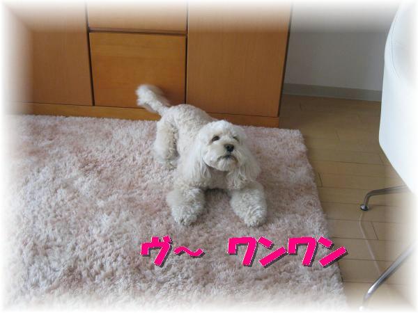 034_convert_20120113191125.jpg