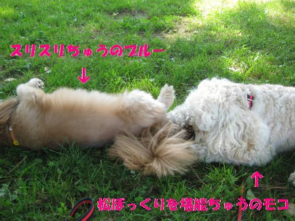 035_convert_20110901141454.jpg