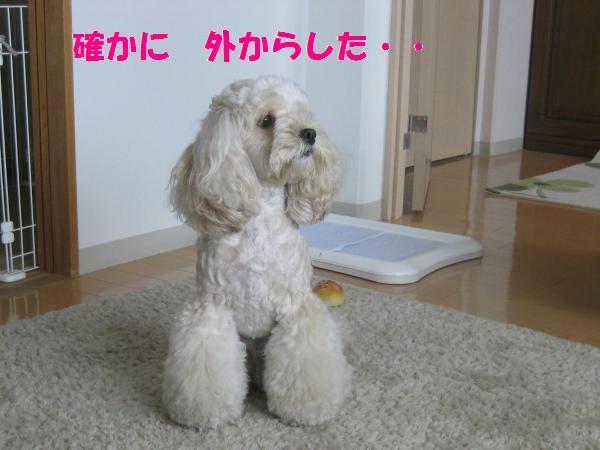 036_convert_20110911140101.jpg