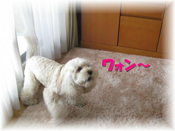 039_convert_20120113191221.jpg