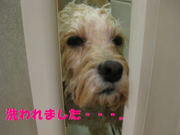 061_convert_20110919015233.jpg