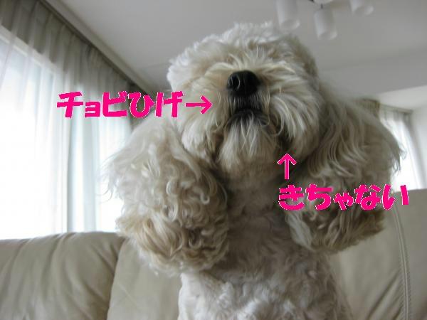 062_convert_20110917135439.jpg