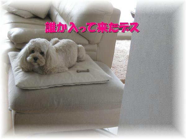 064_convert_20111125134451.jpg