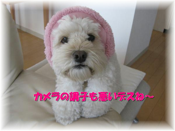 070_convert_20120203153059.jpg