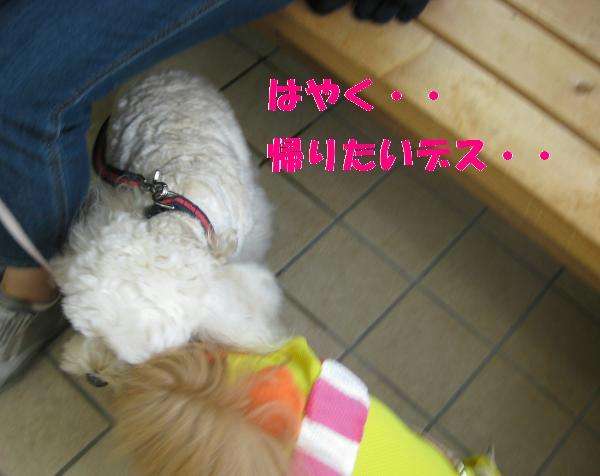 081_convert_20110912142624.jpg